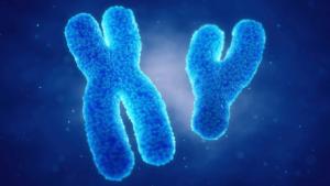 cromosomi x e y